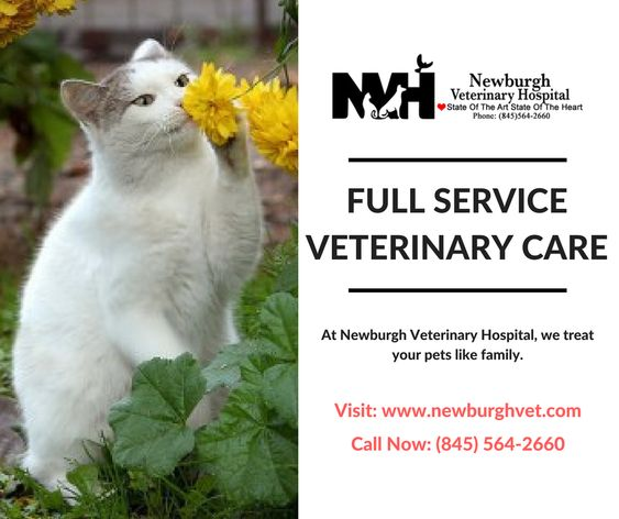 Our Main Goal Is To Keep Your Pet Healthy And Happy We Treat Your Pets Like Our Family And Provide Full Service Ve Veterinary Hospital Pet Vet Animal Hospital
