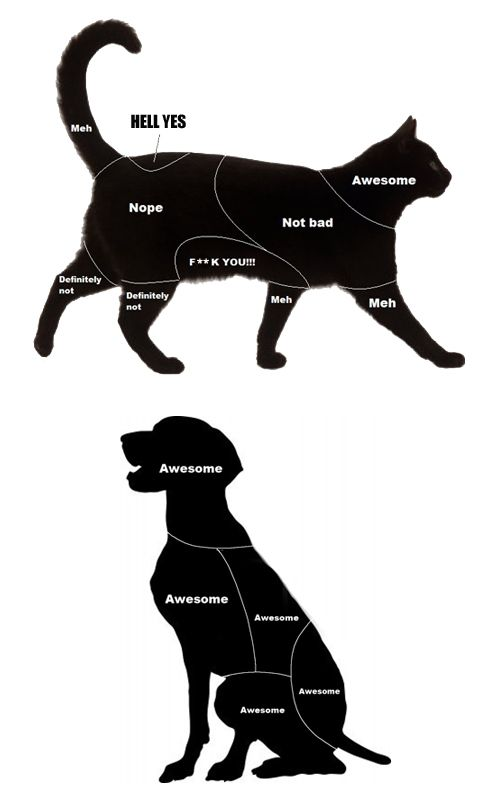 Petting Charts for Cats and Dogs
