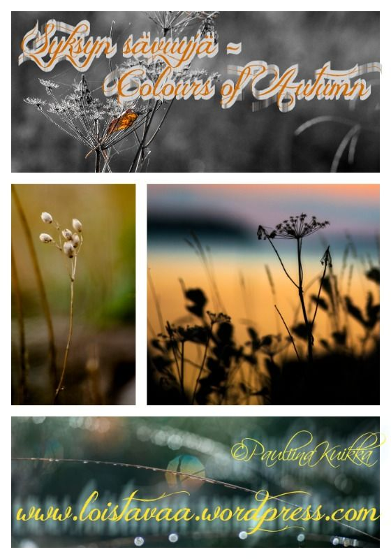 You may enjoy nice photos or order those. Visit my blog and read more. - Voit…