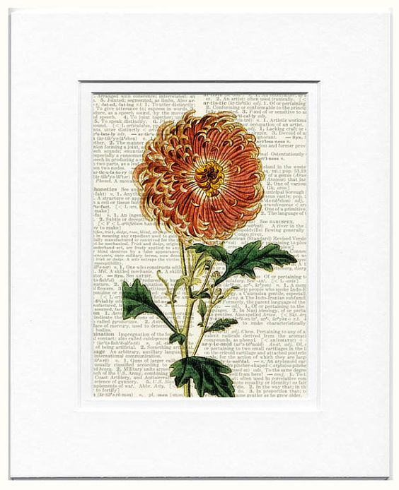 dahlia vintage artwork printed on page from old by FauxKiss