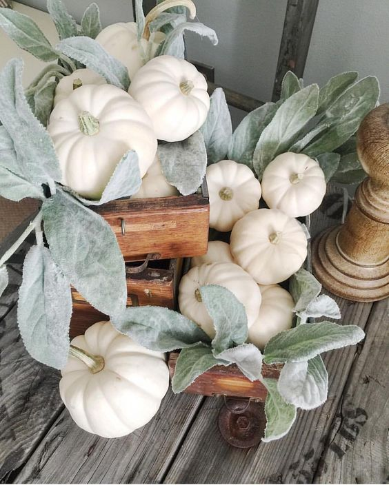 Sweet fall vignette of small white pumpkins and lamb's ear.