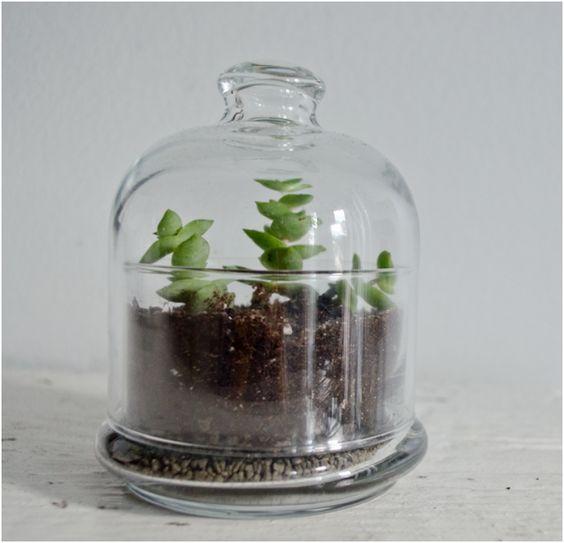10 Terrific DIY Terrariums