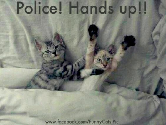 Police. HANDS UP!