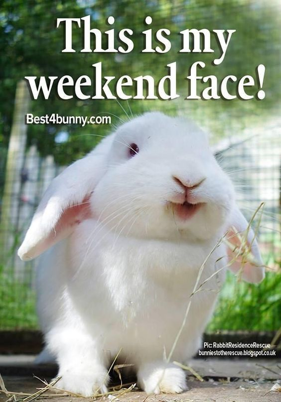 Bunnies love weekends: