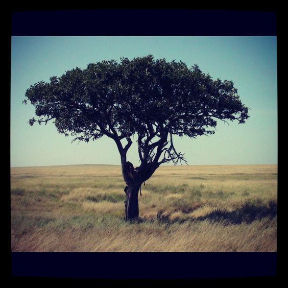 Serengeti National Park, Tanzania.