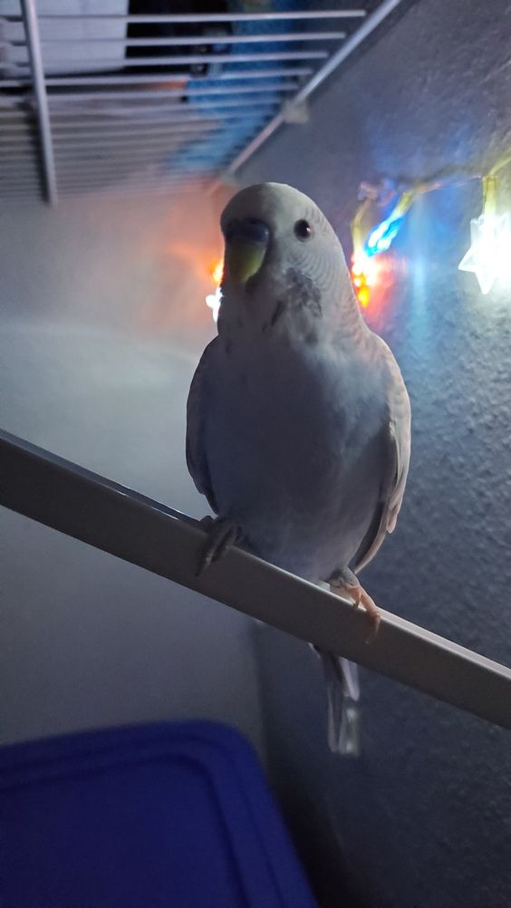 a birb standing on a bar with nice light in the back