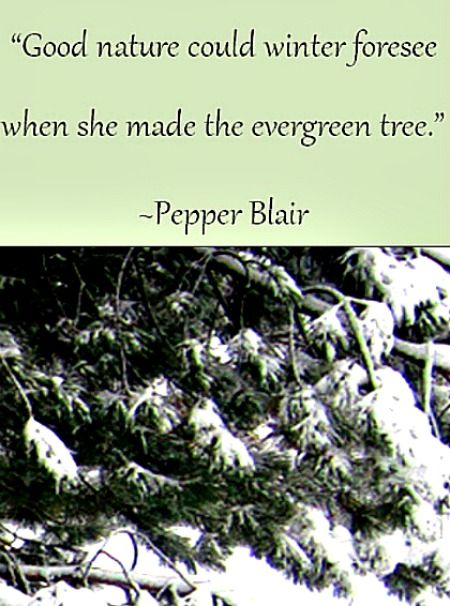 the evergreen tree picture quote