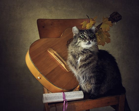 Musical cat by Daykiney on DeviantArt