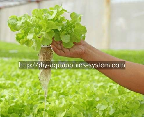 Mini Aquaponics Kit | Aquaponics System, Backyard Aquaponics And Hydroponic  Fish Tank
