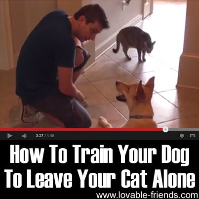 how to train your dog without touching it