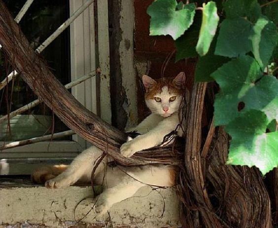 Romeo...