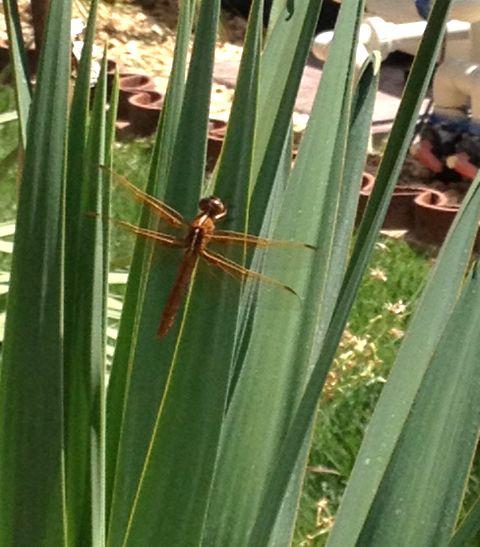 Orange alien dragonfly