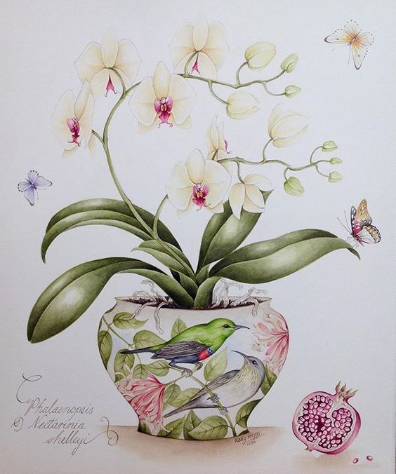 Kelly  Higgs  (b.1978)  —  Shelley's Sunbirds with Phalaenopsis Orchid and Pomegranate  (640×768)