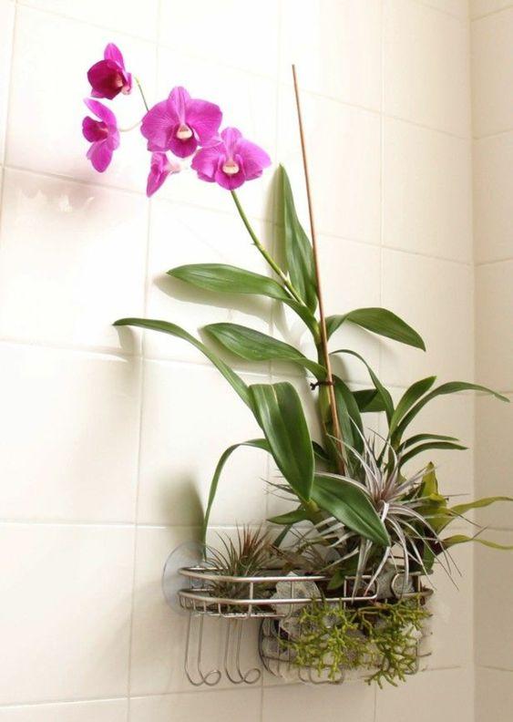 zimmerpflanzen badezimmer dekorieren orchidee pflege lila blüten