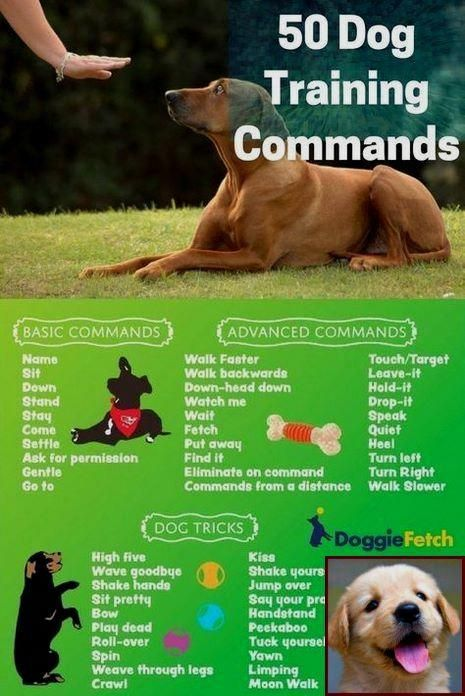 Diplomatic Stored Dog Training Tips Visit Website Dog Clicker