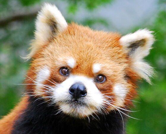 Mozilla stoppe le développement de Firefox Windows 8 style