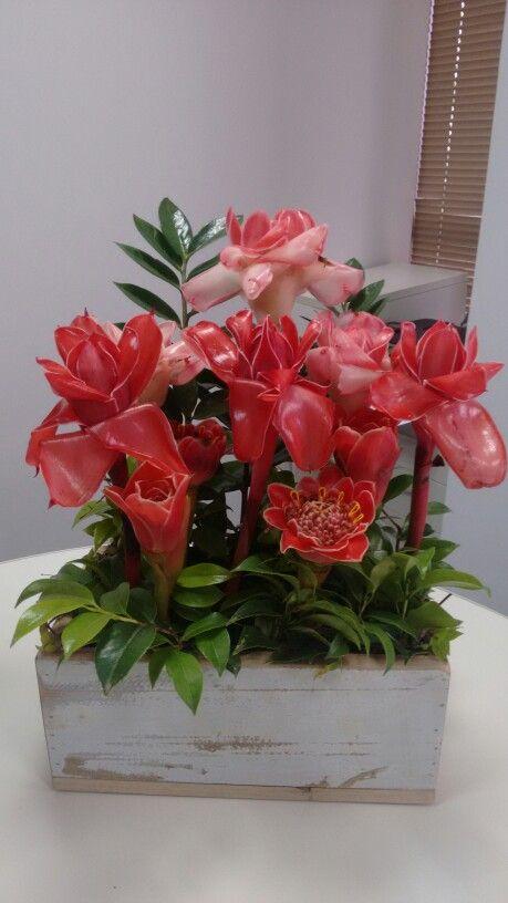 Bastao tulipa + imperador