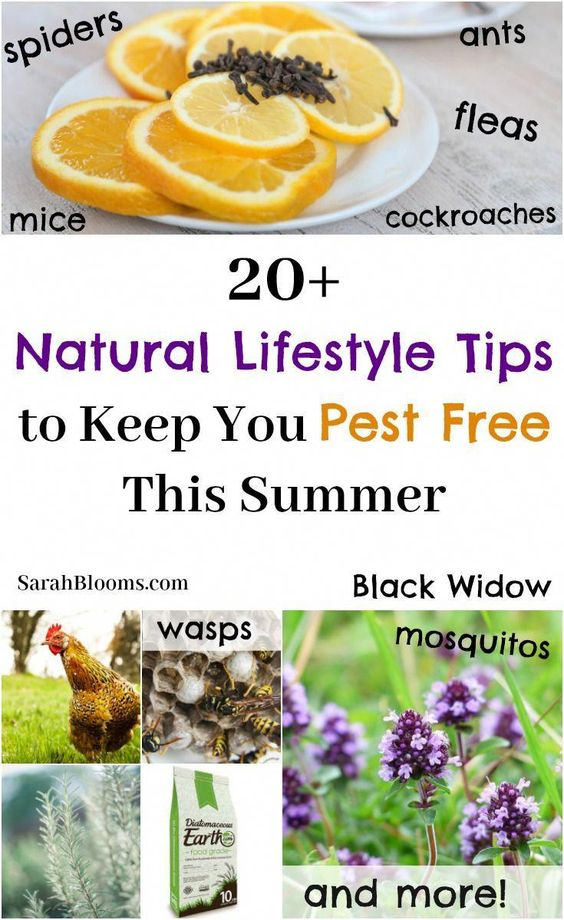 More than 20 Natural Lifestyle Tips to Keep You + Your Home Bug + Pest Free