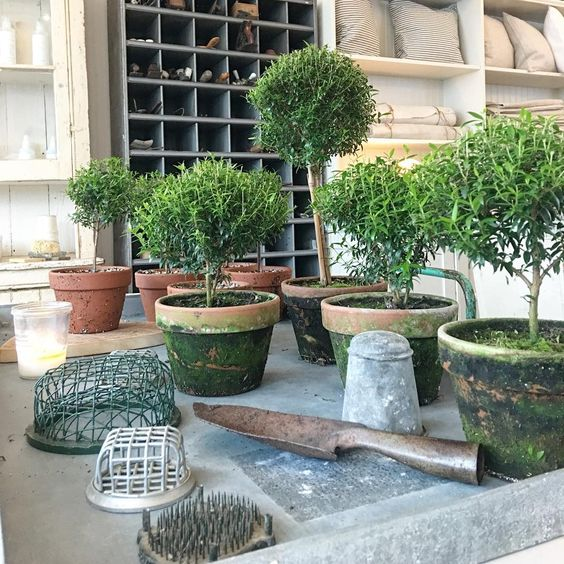 "463 Likes, 13 Comments - White Flower Farmhouse (@whiteflowerfarmhouse) on Instagram: ""Topiaries in the shop #northfork #nofo #farmhousestyle #topiary #whiteflowerfarmhouse…"""