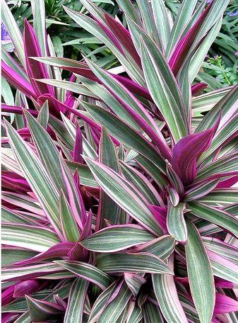 Al otro lado del cristal plantas de interior para personas ocupadas variedades cuidados - Variedades de plantas de interior ...