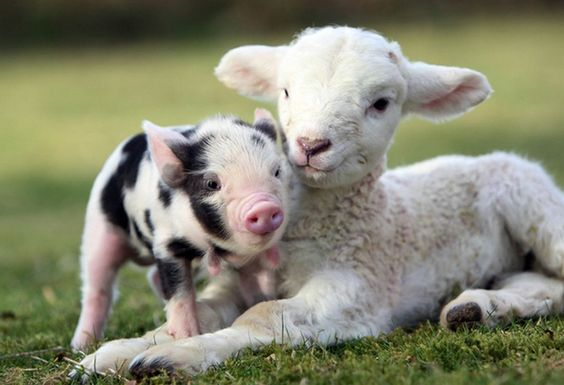 Baby Animals in Nature, Friday is meant for friends and nature.