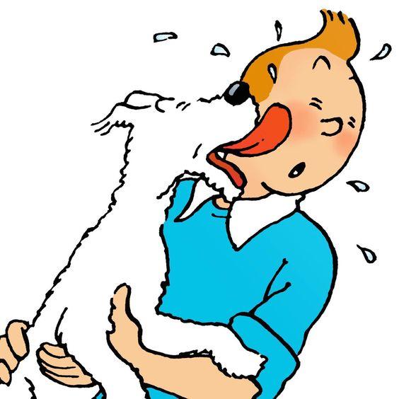スノーウィに顔を舐め回されるタンタンの画像