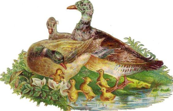 Victorian Die Cut Scrap Duck Family c1880: