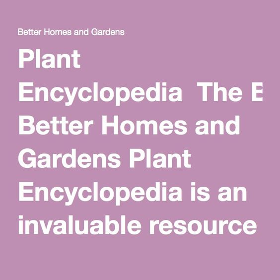 Plant Encyclopedia The Better Homes and Gardens Plant Encyclopedia – Better Homes and Gardens Plant Encyclopedia