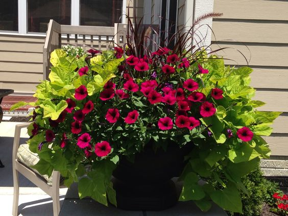 Pinterest the world s catalog of ideas - Wave petunias in containers ...