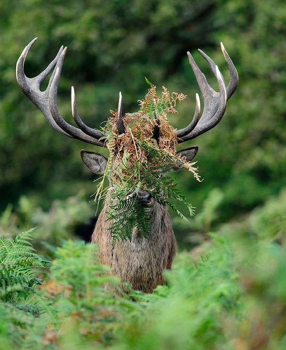 13 miesznych Zdj Dzikich Zwierzt Ktre Poprawi Ci Humor  Interesujace