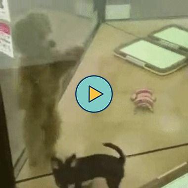 Um cachorro que sabe muito bem dançar