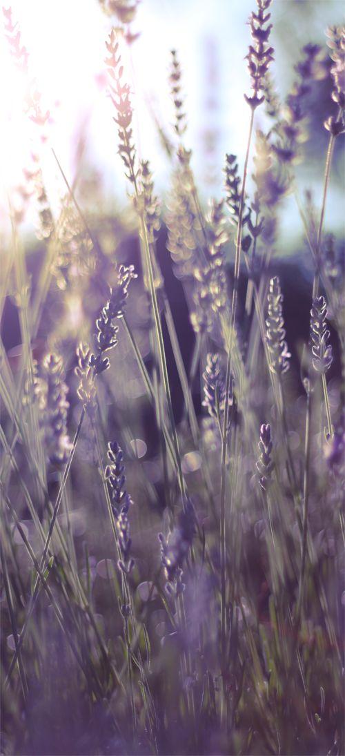 Όμορφες εικόνες... - Σελίδα 3 4dbefdff993c98ee79dcc89bcfcb4899