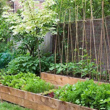 raised veggie beds, trellis