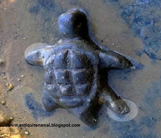 سلحفاة لها أقدام يختلفون في الاتجاه Turtle Animals