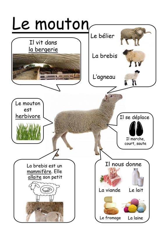 Mouton - Animaux de la ferme: