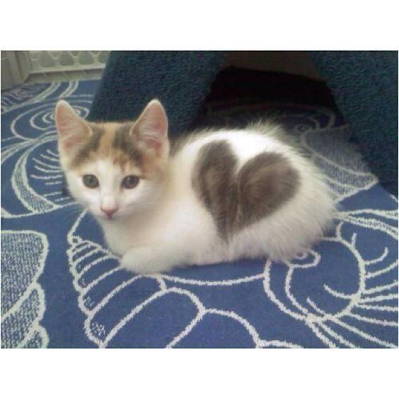 Chats coeur - Salon de chat algerie ...