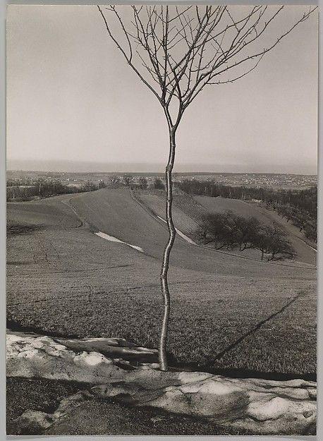 Das Bäumchen Albert Renger-Patzsch  (German, Wurzburg 1897–1966 Wamel)