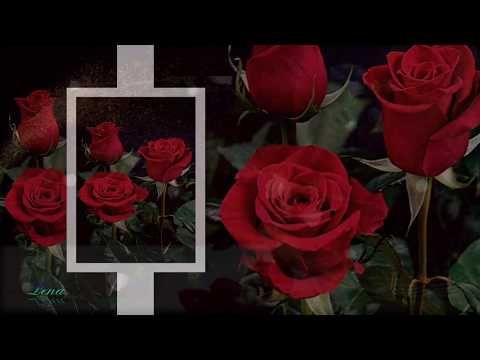 Z Okazji Urodzin Youtube Flowers Plants Rose
