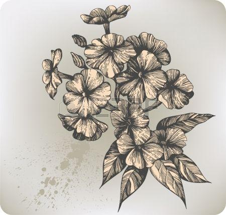 Fleur floraison phlox, la main-dessin. Vector illustration. photo