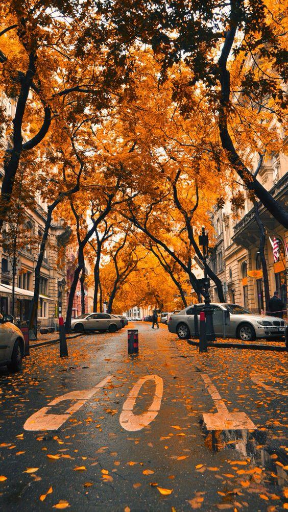 Fall iPhone wallpaper