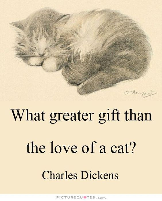 """What greater gift than the love of a cat? Yes indeed! Who can argue with that?!"":"