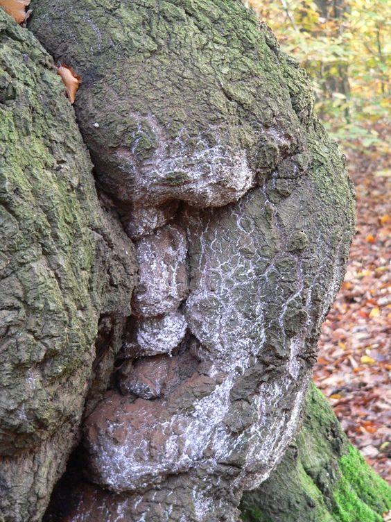 дърво лице - Фотография на Алън Бигънс - Галерия с местоположения