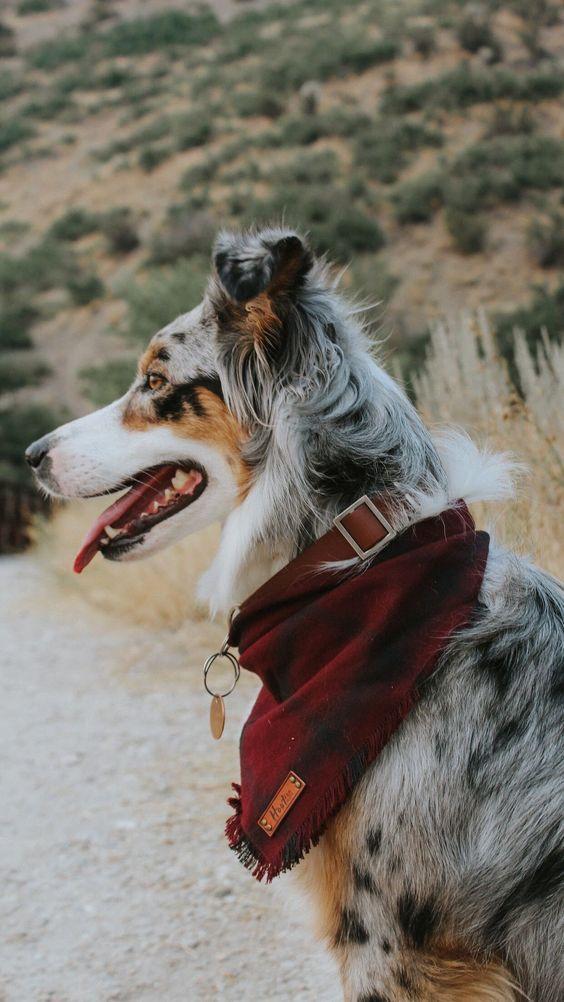 International Bandanna Day 10 Dogs Wearing Bandannas To Raise Awareness Pet Bandana Dog Bandana Dog Clothes