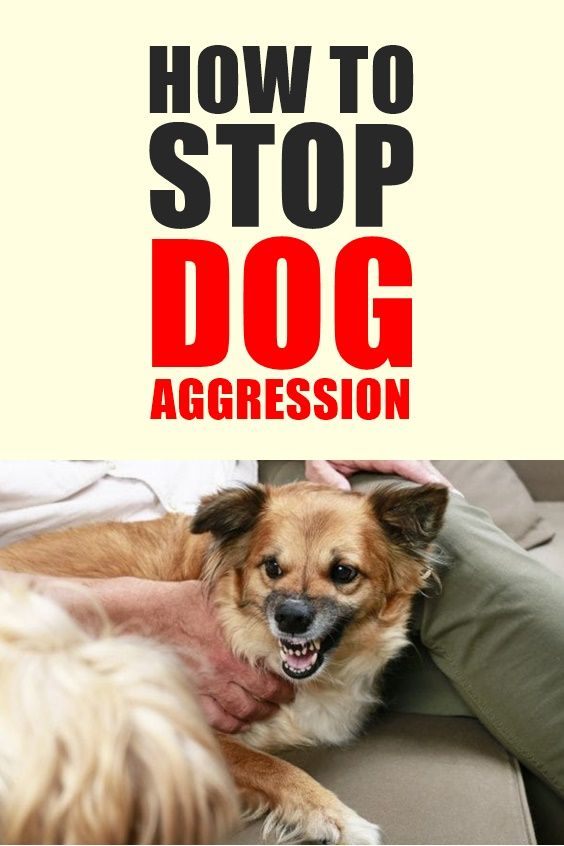 Here S How To Stop Dog Aggression Towards People And Other Dogs
