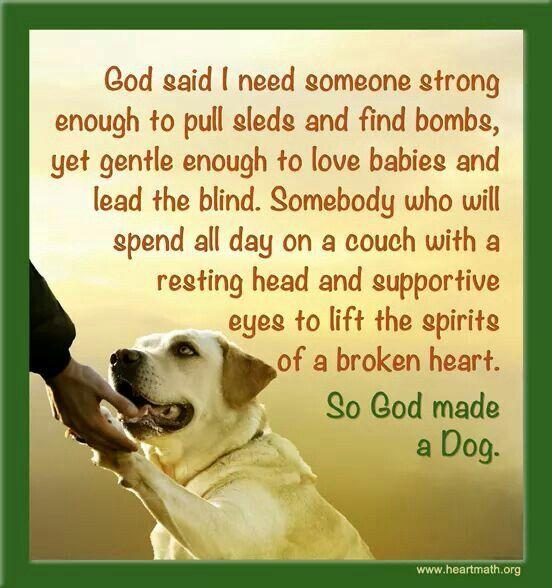 God made a Dog