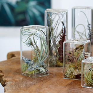 My house will have a terrarium in every nook and cranny