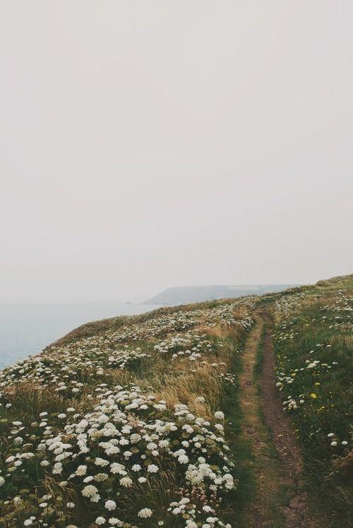 Imagen de flowers, nature, and landscape