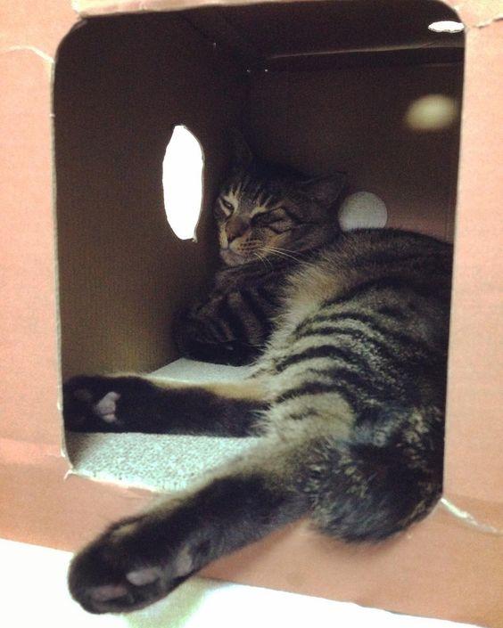 夕方ムサシさんはみ出し昼寝naptime. #musashi #mck #cat #キジトラ #ムサシさん by _daisy