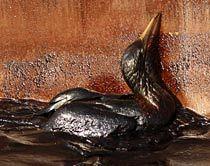 Öl gefährdet Vogel; Bild von ap