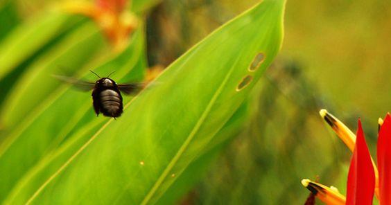 Besouro em voo e flores são clicadas em parques da cidade de Campinas